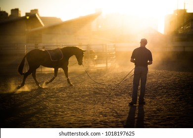 late afternoon horse work in the yards
