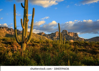Late afternoon light creates beautiful shadows on Pusch Ridge and saguaros at Santa Catalina State Park, Oro Valley near Tucson, Arizona. - Shutterstock ID 1840594636