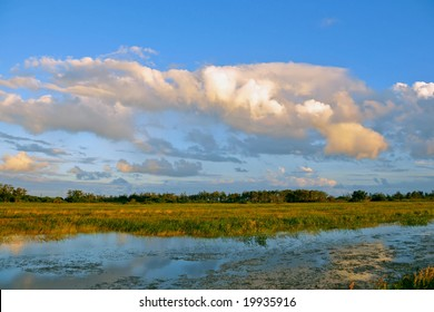 late afternoon at south florida wetland in everglades ecosystem
