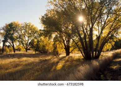 Late afternoon sun among the fall colors of Cottonwood trees in western Nebraska.