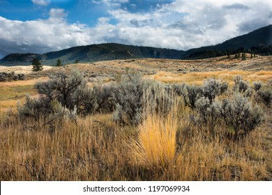 Late afternoon sun and clouds bath the rolling hills covered with sagebrush and bright yellow sedge in Yellowstone NP.