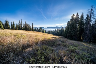 Late afternoon sunshine in a meadow in Wyoming's Bridger Teton National Forest. Fog and haze lingers in mountains below from nearby wildfire