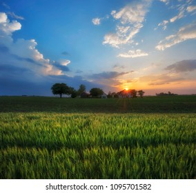 Late afternoon Wheat Agricultural Fields Cloudy Sunset