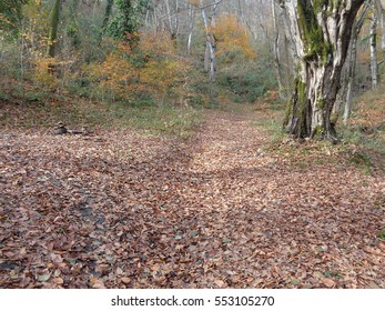 Late Autumn in the Caucasus forest, fallen leaves on the ground
