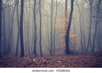 Late autumn forest in the fog, ground covered with brown leaves