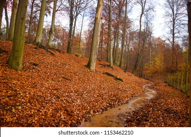 late autumn forest. red leaves on wet ground. hill mountain scape with streams. green moss on the trees trunk rocks. narrow paths. indian summer tone. saturated colors. Deciduous plants. humid woods.