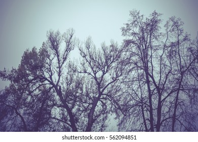 Late autumn forest tree branches without leaves, filtered background.