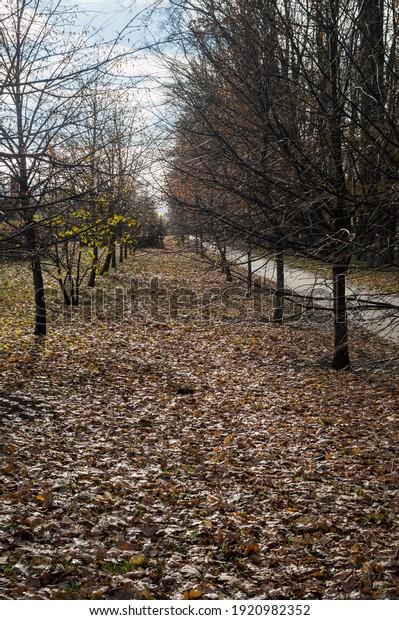 late-autumn-landscape-alley-bare-600w-19