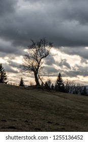 late autumn scenery with meadow, trees, hills on the backgrounad and mostly cloudy sky on Loucka hill in Slezske Beskydy mountains in Czech republic