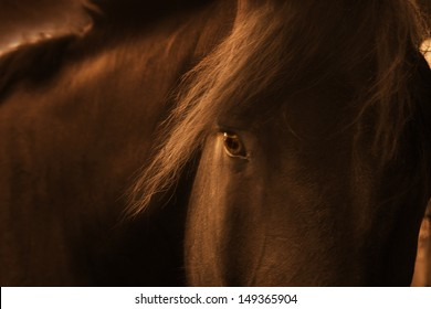 Late Day Portrait Of A Playful Farm Horse. Old western toning and soft film grain added to enhance this photo illustration.