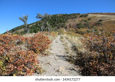 Late fall colors of oak trees along bonneville shoreline trail in the Wasatch Mountains near Salt Lake City, Utah