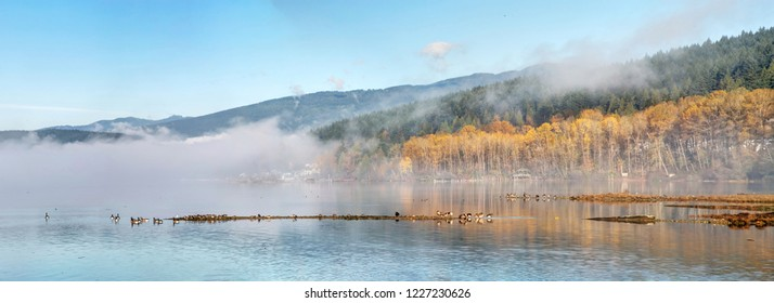 late fall colours in Inlet Park in a foggy morning, Port Moody, British Columbia, Canada