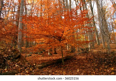 late fall foliage in the forest