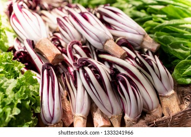 Late red chicory of Treviso, Italy, the most precious variety of this chicory, unique for its making process and for its taste, lightly bitter.