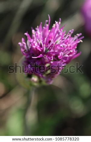 Late Spring Flowers Stock Photo Edit Now 1085778320 Shutterstock