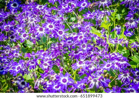 Late Spring Flowers Stock Photo Edit Now 651899473 Shutterstock