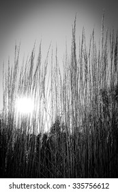 Late summer or autumnal rural sunny landscape. Dry grasses field, black and white version