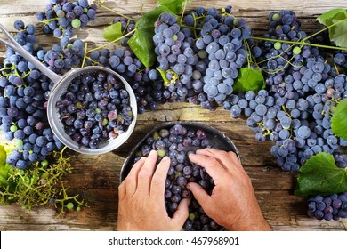 Late summer fruits, preparation of black strawberry grapes