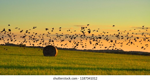 Late summer landscape flying birds