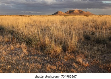 Late sunlight on golden dry wild grasses/Dry Grassland at Sunset/Prairie in late sunshine