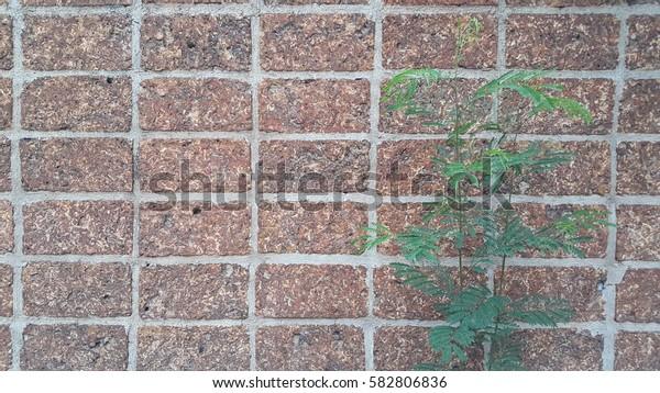 laterite stone texture,tree
