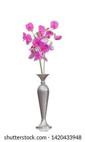 Lathyrus latifolius, the perennial peavine aka perennial pea, broad-leaved everlasting-pea, or just everlasting pea. In old vase, isolated on white.