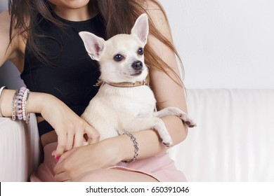 Latin girl with her lovely dog, a white chihuahua, indoors, seated in a couch, over a white wall.