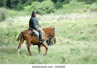the latin horseman (gaucho). ecuador. south america