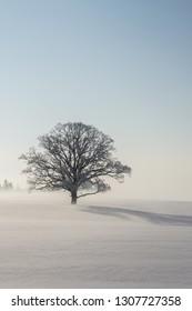 Latvia, Vidzeme -  1 31 2019 : Winetr wonderland, snow field and tree - Shutterstock ID 1307727358