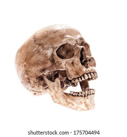 Laugh skull model bone on isolated white background