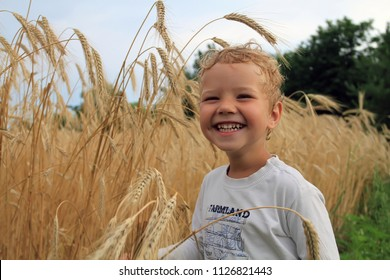 The laughing boy is holding wheat grain ears in his hands. A little white boy on a farm near the field with yellow wheat. The child on the field checks the grain yield.