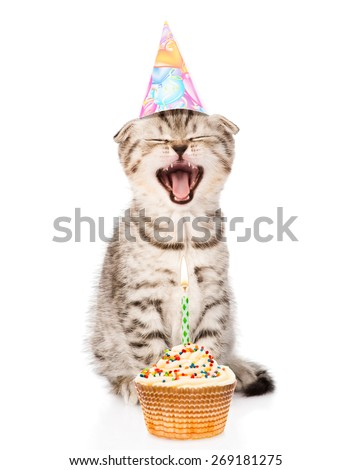 Laughing Cat With Birthday Hat And Cake Isolated On White Background