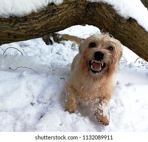 Laughing dog on the snow