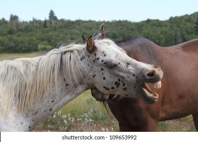 The Laughing Horse