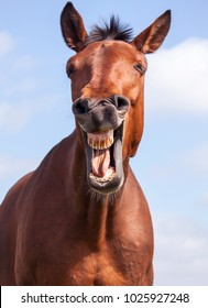 The laughing horse against the background of the summer sky