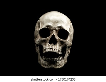 Laughing Human Skull. Evil Skeleton. Skull with open mouth isolated on black background.