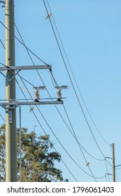 Laughing Kookaburras on a powerline near Tilligerry State Conservation Area, NSW, Australia on an spring afternoon in November 2019