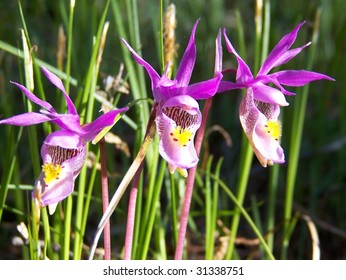 Laughing orchids