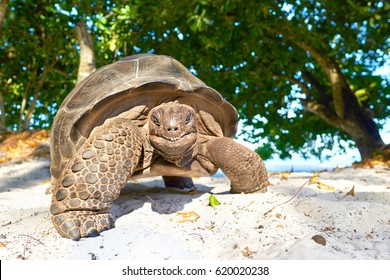 laughing turtle, Seychelles giant tortoise - wildlife