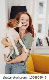 Laughing woman holding her cute little terrier breed pet dog which is licking her face indoors in her living room