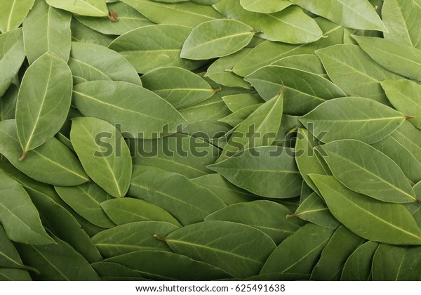 laurel (bay leaf) background