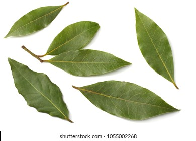 Laurel leaves isolated on a white background top view