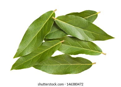 Laurel leaves on white background