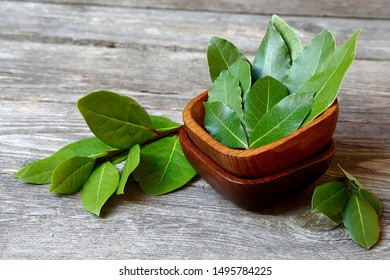 Laurel or sweet bay in a wooden bowl on a gray table