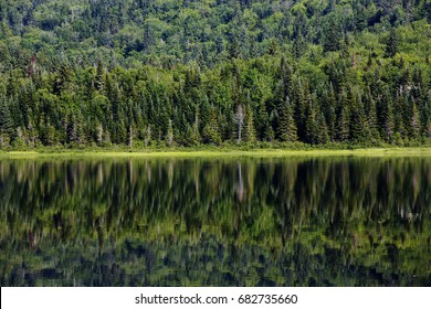 Laurentian forest reflection in the lake