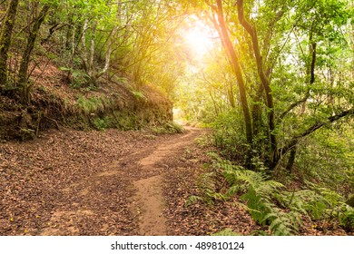 Laurisilva forest in Anaga, Tenerife, Canary islands, Spain