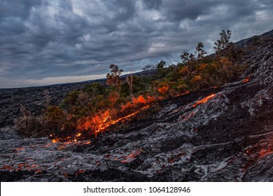 Lava burns down a remaining patch of forest