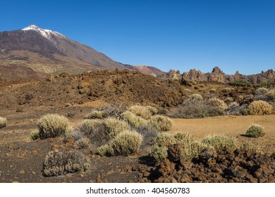 Lava Field with bushes El Teide on the island of Tenerife in Spain.