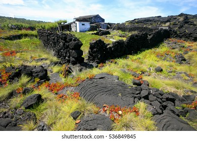 lava fields and vineyards in Pico island, Azores