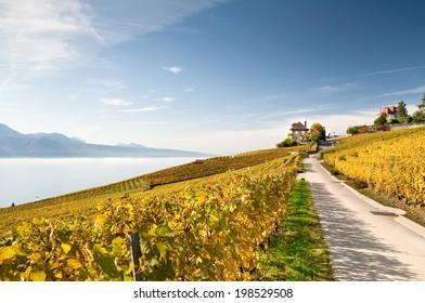 Lavaux roads in Switzerland